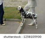 Dog in Sity, Summer 2007