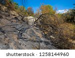 carbonized tree and grove... | Shutterstock . vector #1258144960