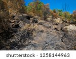 grove burned after fire and... | Shutterstock . vector #1258144963