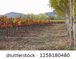 fall foliage  autumn landscape... | Shutterstock . vector #1258180480