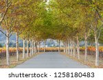 fall foliage  autumn landscape... | Shutterstock . vector #1258180483