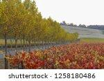 fall foliage  autumn landscape... | Shutterstock . vector #1258180486