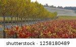 fall foliage  autumn landscape... | Shutterstock . vector #1258180489