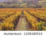 fall foliage  autumn landscape... | Shutterstock . vector #1258180513