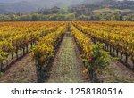 fall foliage  autumn landscape... | Shutterstock . vector #1258180516