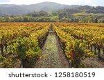 fall foliage  autumn landscape... | Shutterstock . vector #1258180519