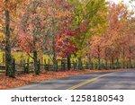 fall foliage  autumn landscape... | Shutterstock . vector #1258180543