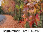 fall foliage  autumn landscape... | Shutterstock . vector #1258180549