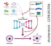 probiotic bacteria prevent dna...   Shutterstock .eps vector #1258181506