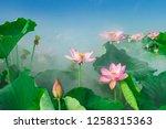 lotus flower blossom | Shutterstock . vector #1258315363