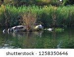 nile river near aswan  egypt   Shutterstock . vector #1258350646
