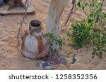 nile river near aswan  egypt....   Shutterstock . vector #1258352356