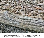 the trunk of a tree with... | Shutterstock . vector #1258389976