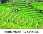 Beautiful Terrace Rice Fields...