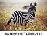 Zebra Portrait On African...