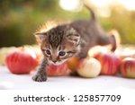 Stock photo little kitten on the autumn apple background 125857709