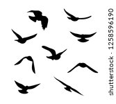flying birds silhouettes... | Shutterstock .eps vector #1258596190
