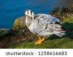 photo of a bird with soft... | Shutterstock . vector #1258616683
