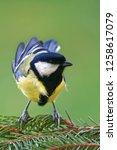 great tit  parus major  is a...   Shutterstock . vector #1258617079