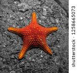 Starfish In The Galapagos