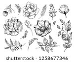 set of peonies with leaves.... | Shutterstock .eps vector #1258677346