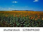 france  sunflowerf ield in... | Shutterstock . vector #1258694260