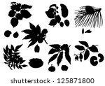 Collection of silhouettes of nuts