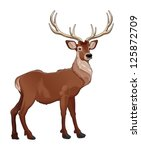 elegant deer. vector isolated... | Shutterstock .eps vector #125872709