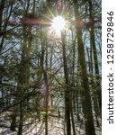 noon sun over the woods  as sun ... | Shutterstock . vector #1258729846