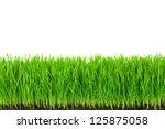 green  grass with fertile soil... | Shutterstock . vector #125875058