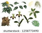 tropical jungle orchid flowers  ... | Shutterstock .eps vector #1258773490