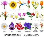 18 species of colorful flowers | Shutterstock .eps vector #125880293