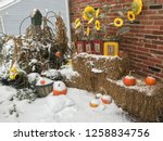 Snow On Fall Flowers