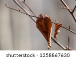 leaves during the autumn season | Shutterstock . vector #1258867630