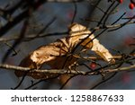 leaves during the autumn season | Shutterstock . vector #1258867633