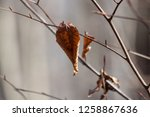 leaves during the autumn season | Shutterstock . vector #1258867636