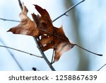 leaves during the autumn season | Shutterstock . vector #1258867639