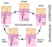 Hair growth cycle - stock photo