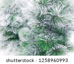 Pine Trees Have Snow On The...