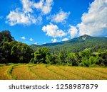 summer landscape green field... | Shutterstock . vector #1258987879