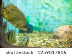 tropical underwater coral life... | Shutterstock . vector #1259017816