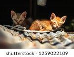 tow little cat get sick their...   Shutterstock . vector #1259022109