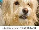 dog at the animal shelter of... | Shutterstock . vector #1259104600