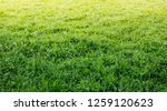 idyllic field landscape with... | Shutterstock . vector #1259120623