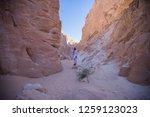 wadi watir  sinai   egypt   may ... | Shutterstock . vector #1259123023