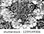 abstract background. monochrome ... | Shutterstock . vector #1259149306