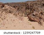 south sinai  sinai   egypt   25 ... | Shutterstock . vector #1259247709