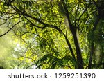 beam through the tree into the...   Shutterstock . vector #1259251390