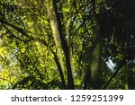 beam through the tree into the...   Shutterstock . vector #1259251399