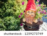Garden Gnome Surrounded By...